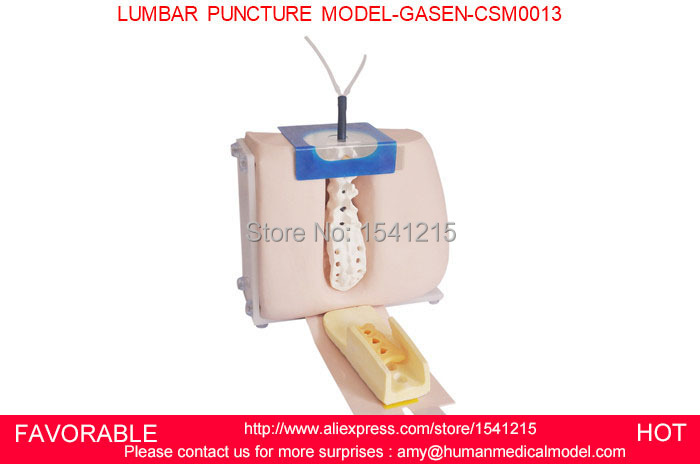 LUMBAR PUNCTURE SIMULATOR MODEL, VERTEBRAL PUNCTURE MODEL,SPINAL PUNCTURE MEDICAL SIMULATOR LUMBAR PUNCTURE MODEL-GASEN-CSM0013 peritoneal dialysis simulator model