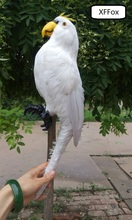 big real life white parrot model plastic&feather simulation bird gift about 43cm xf0139