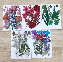 1 Set Mixed Dried Pressed Flower+ Leaves Plants Herbarium For Jewelry Postcard Photo Frame Phone Case Making DIY 5 Designs Pick