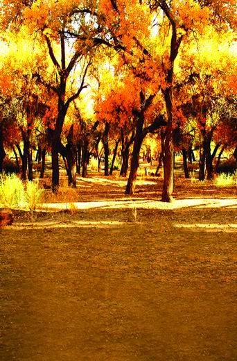 Kate Backdrop for Photography Fall Forest Sunset Natural Scenery Romantic Photography Background for Wedding Photo Studio 3909 10ft 20ft romantic wedding backdrop f 894 fabric background idea wood floor digital photography backdrop for picture taking