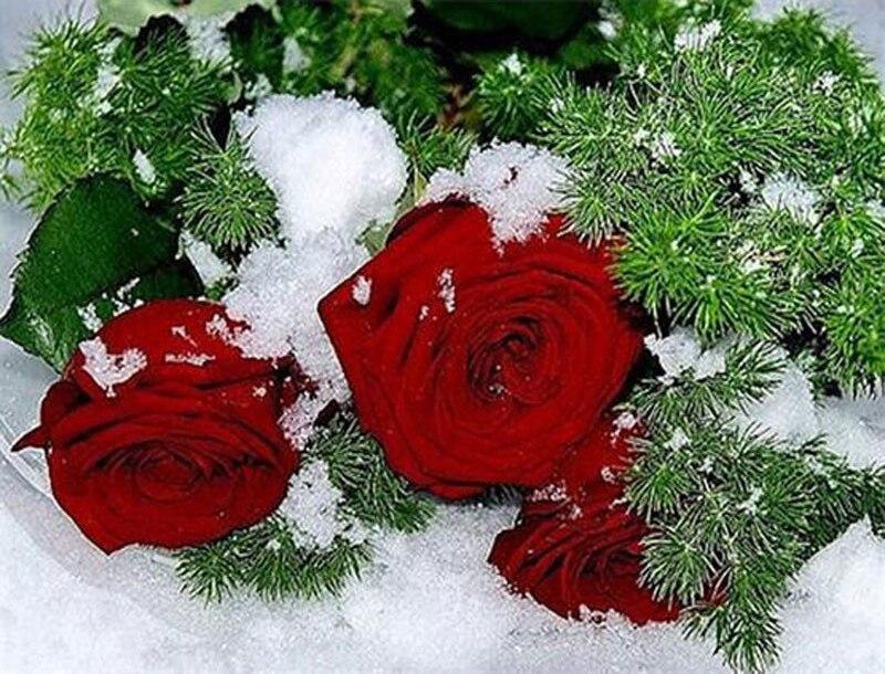 Картинки фотографии цветы поздравления новогодние