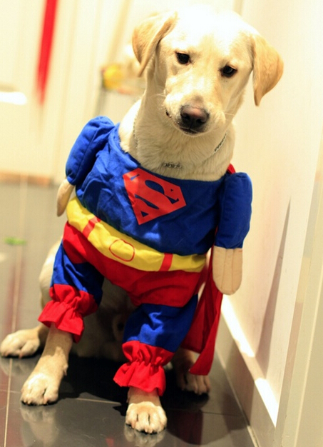 Pet clothes Superman wear CAT Dog Costumes Dogs make up loading Funny clothing Big dog & Pet clothes Superman wear CAT Dog Costumes Dogs make up loading ...