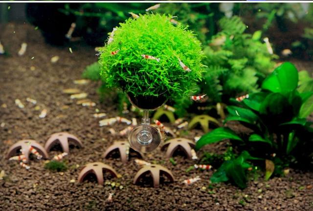 Water Grass Planting Cup Micro Landscape Bonsai For Aquarium Fish Tank  Shrimp Tank