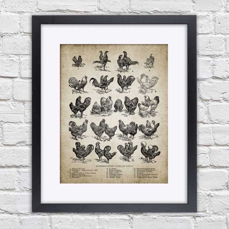 Breeds Of Chicken Vintage Farmer Gifts Art Wall Decor Gifts Poster No Frame