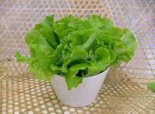 Салат семена для продажи дешево, салат, Легкая посадка семена овощных культур-120 Семян частиц