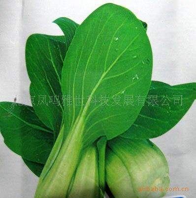 May spread rape seeds 2 hot organic vegetable seeds 100