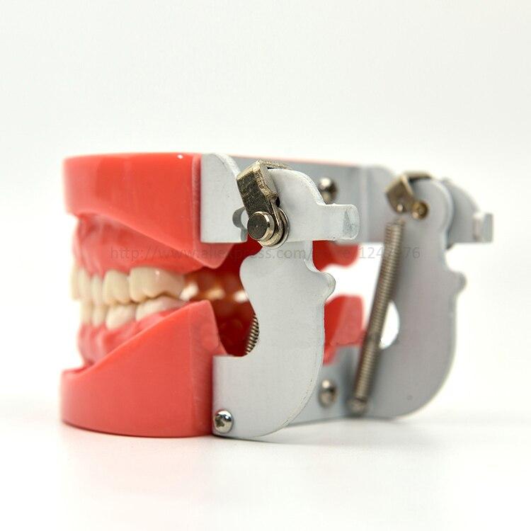 Стоматологическая Съемная Стоматологическая Модель Стоматологическая зубная композиция практическая модель с винтовой обучающей модели... - 5