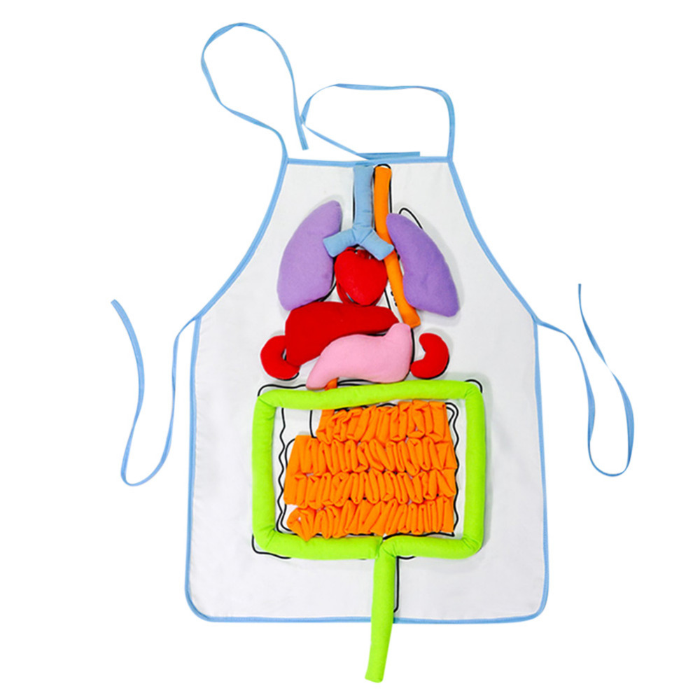 Kindergarten Viscera Teaching Utensil Children Educational Intellectual Development 3D Organ Apron plush toy for kids