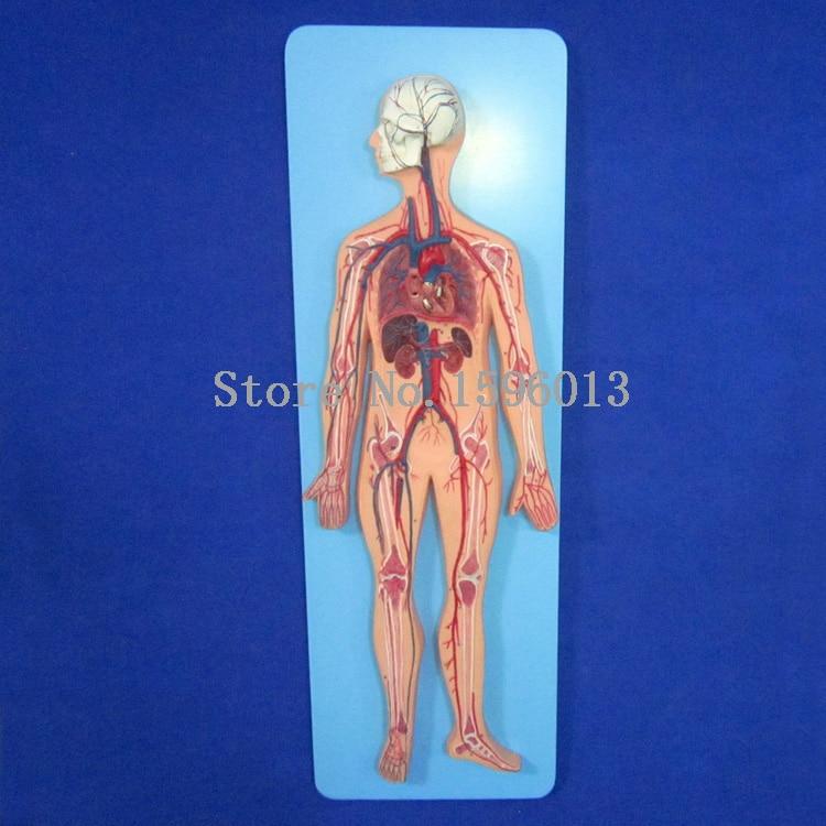 модели кровообращения - Human Blood Circulatory System Model, Blood Circulation model