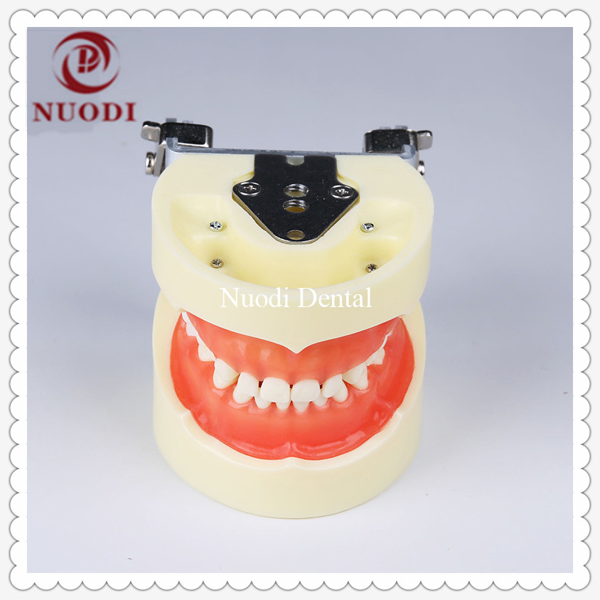 Standard Education Child Teeth Model with Soft Gum/Removeable Tooth Model for Children/Dental Study KidsTeeth Model 24pcs free shipping good quality dental soft gum teeth model with tougnetypodont w 32 removable teeth nissin 200 compatible