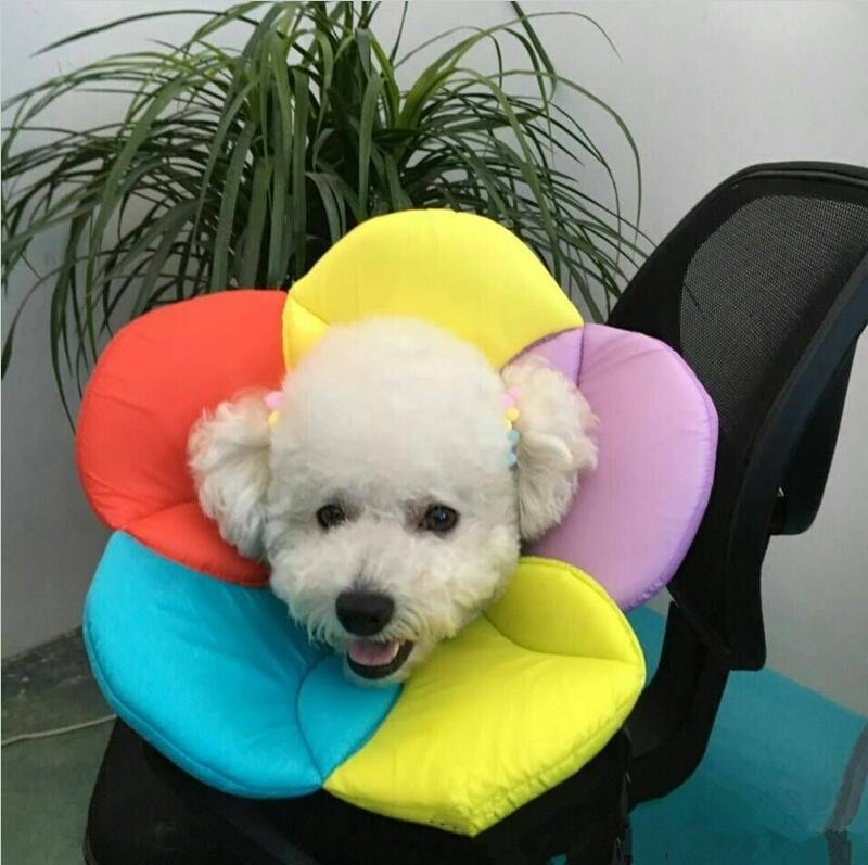 NEW Soft Dog Cat Grooming Protector Collar Cover Adjustable Healing Growing  Necklace Anti Bite No lick The Wound Flower Shape-in Collars from Home &  Garden ...