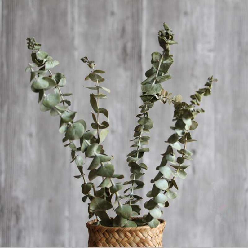 Eucalyptus natural dry branch flower arrangement indoor soft equipment furnishings art props props home decoration