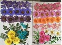 Assorted Larkspur/Liści/Chryzantemy Niebieski I Różowy Kwiat Suszone Kompozycje Kwiatowe DIY Phone Case darmowa wysyłka 2 worków