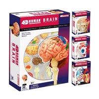 1Pcs Human Body 4D Skeleton Anatomy Skull Manikin Heart Anatomy Life Size Ear Model Educational Puzzle Kids Medical Science Toys