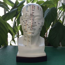 22cm head Acupuncture Point Model,Head Acupuncture Four function Model,Acupuncture Model