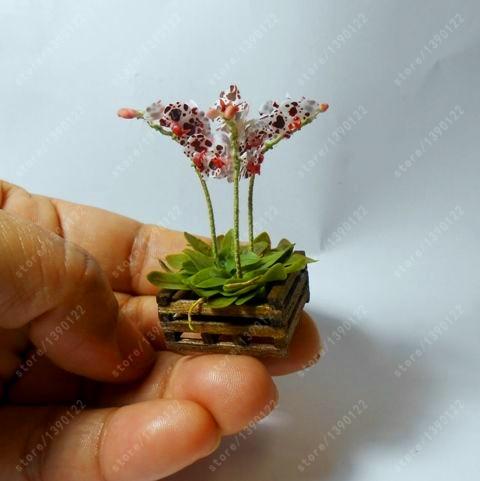 горшки для орхидей купить