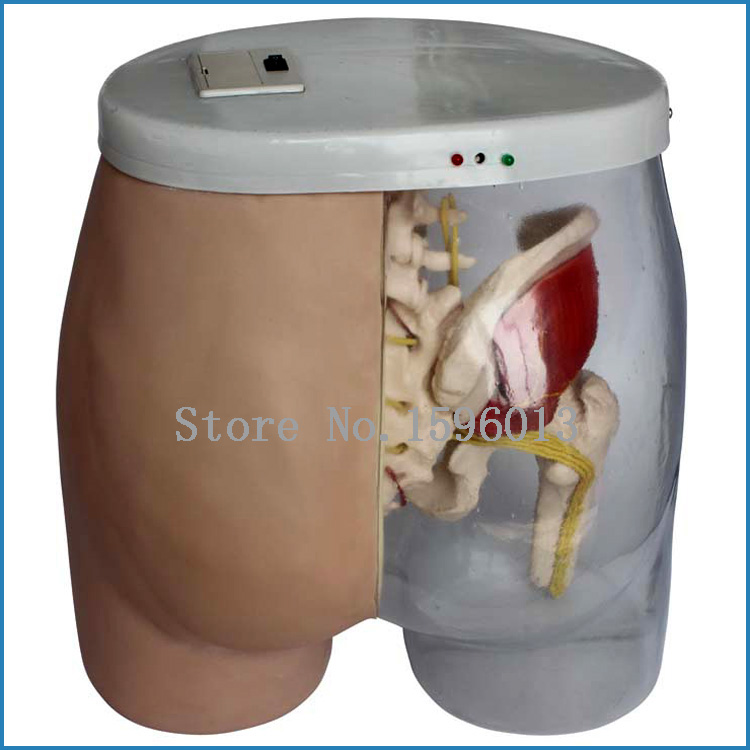 Buttocks intramuscular injection training and comparison model, buttocks Intramuscular Injection Model buttocks intramuscular injection training and contrastive model injection teaching simulator with muscles and nerves
