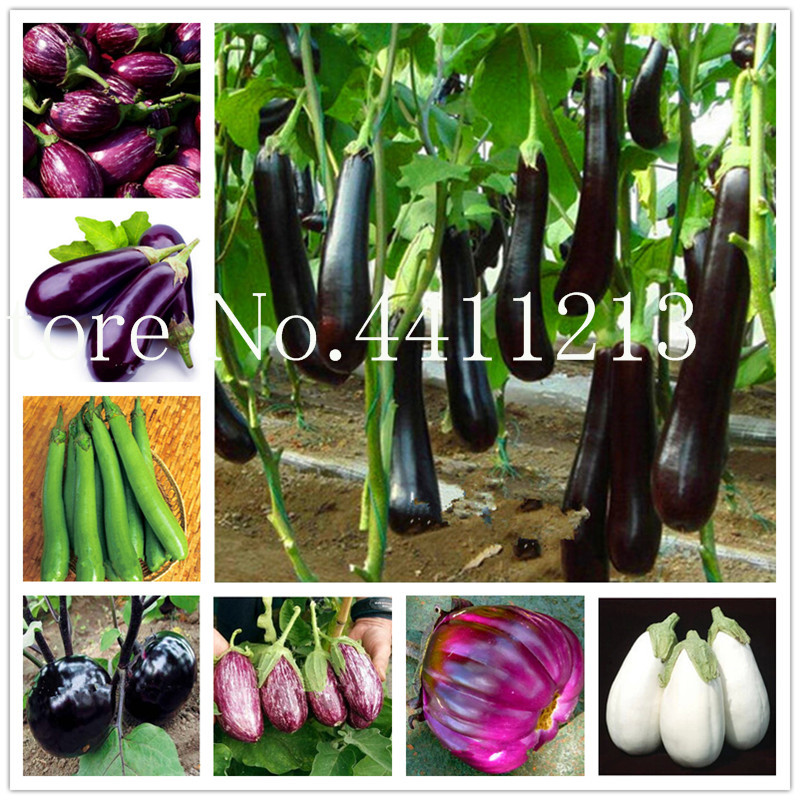 200 Pcs Black Long Eggplant Bonsai, Big Organic Heirloom Plants Vegetables, Flowering Potted Plant Garden For Home Garden
