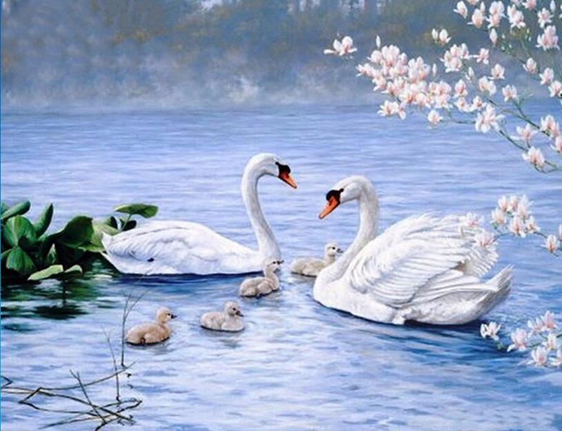 Красивые лебеди на открытку