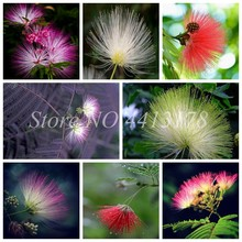 20 pcs/ bag Bonsai Albizia Flower Outdoor Called Mimosa Silk Tree Rare Garden Potted Plants Rainbow Flowers Pot * DIY Plant Gift(China)