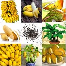 Hot Sale!100 Pcs Dwarf Banana Seeds Bonsai Tree,Tropical Fruit Seeds,Bonsai Balcony Flower for Home Planting,Germination Rate of