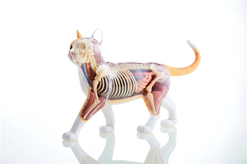 Orange yellow cat 4d master puzzle Assembling toy Animal Biology organ anatomical model medical teaching model 4d master cat puzzle assembling toy animal biology organ anatomical model medical teaching skull skeleton model science toys