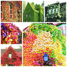 Creepers Flower Promotion-Shop for Promotional Creepers