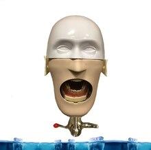 Стоматологическая Студенческая Модель стоматологические манекены и модели фантомная головка для обучения и обучения в стоматологических классах