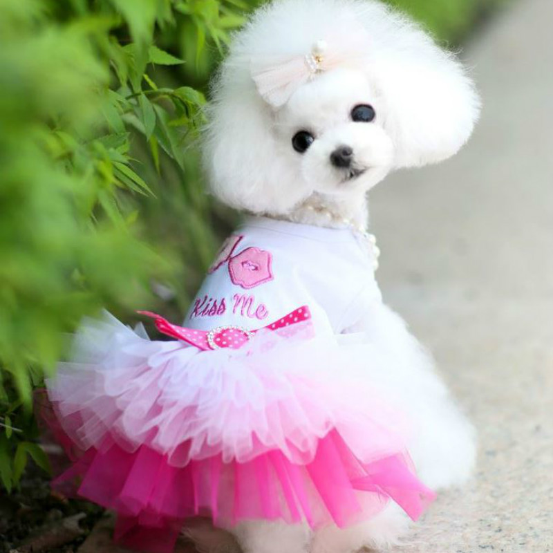 The Lip Skirt Dog Clothes for Pets Kiss me Pink Dogs Dresses Pet Products Cat Dress XS-XXL Blue Animal Supplies image