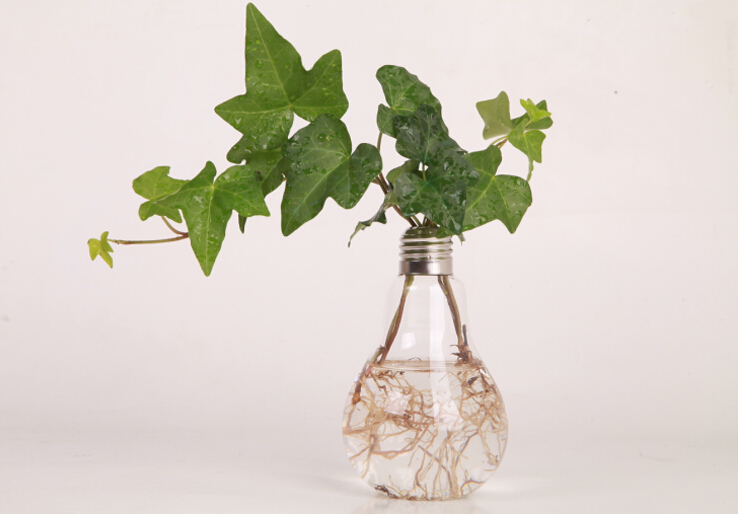 Clear Light Bulb Shape Stand Glass Plant Flower Vase
