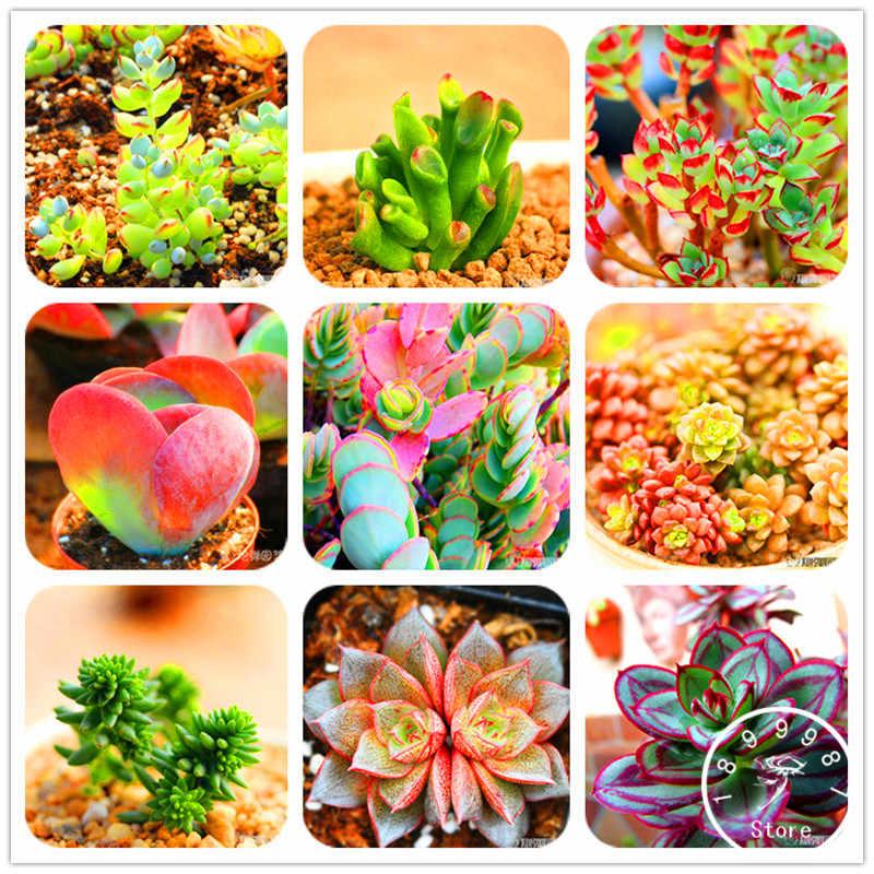 Sale Promotion!10pcs 99 Kinds to choose Lithops garden Succulents plant Pseudotruncatella Bonsai Flower flores,#AAAAA