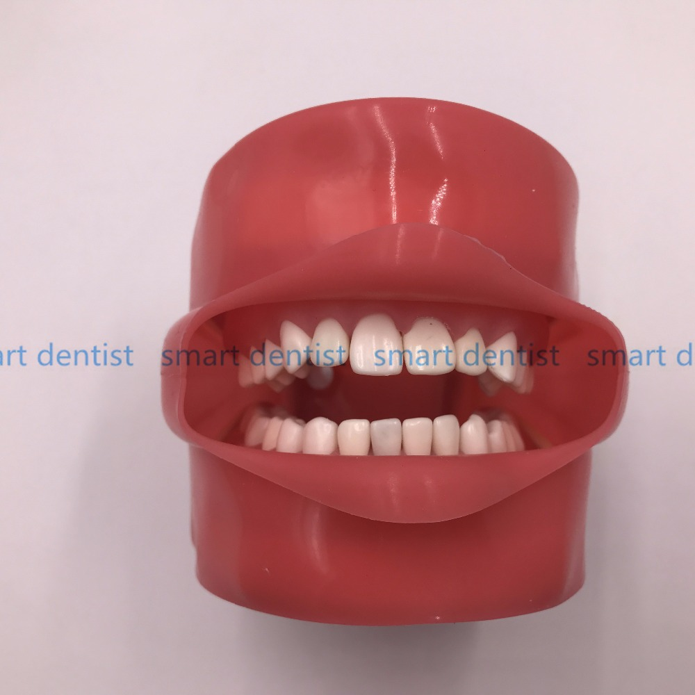 Good Quality Oral Simulation Practice System Dental Phantom Head for Dental School - 3