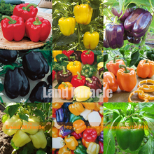 9 Packs, 20 Seeds/Pack(=180 Seeds), 9 Colors Sweet Pepper Mixed Chilli Seeds, Edible Organic Paprika Vegetable Annual Plants