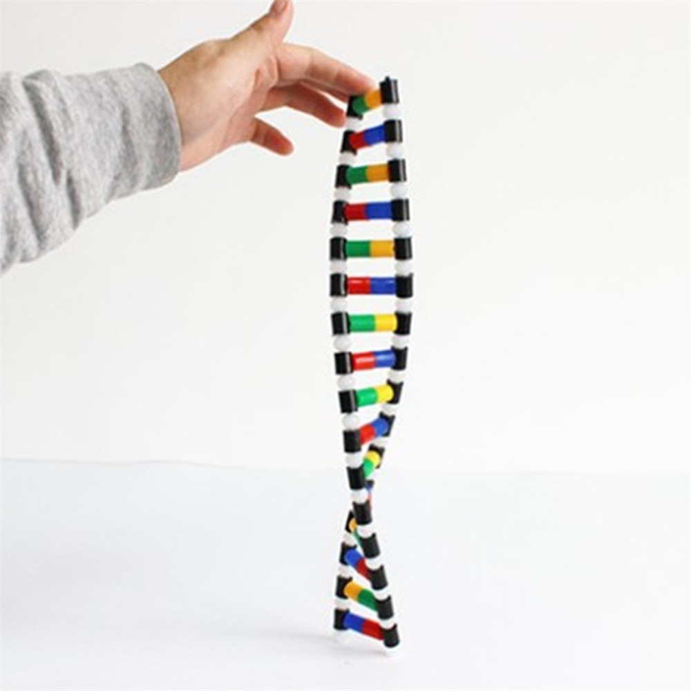 DNA Double Helix Structure Model Education Equipment dna structures part a synthesis and physical analysis of dna 211