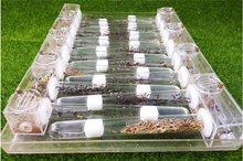 Nid de fourmis, Tubes en verre, 18mm, dispositif scientifique pour fourmis à insectes
