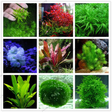 100pcs/bag Aquarium Plants bonsai Grass Water Aquatic Plant garden Indoor Ornamental Plant Grass flores for Home Fish tank