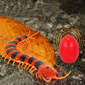 Remote Control Simulation Centipede IR Centipede Tricky Funny Toy Prank Gift Halloween Gifts Animal Model Educational Toys