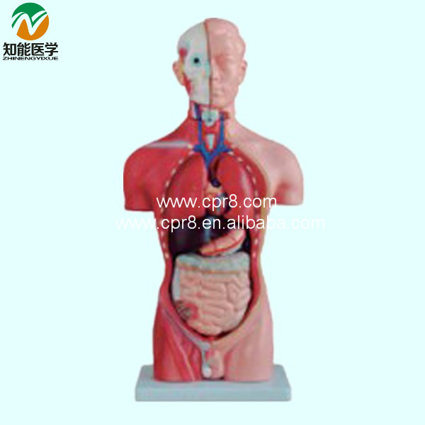 Half-Body Male Torso Mannequin (13 Parts)42cm BIX-A1037 WBW302 new female woman half body top shirt display inflatable mannequin dummy torso model free shipping