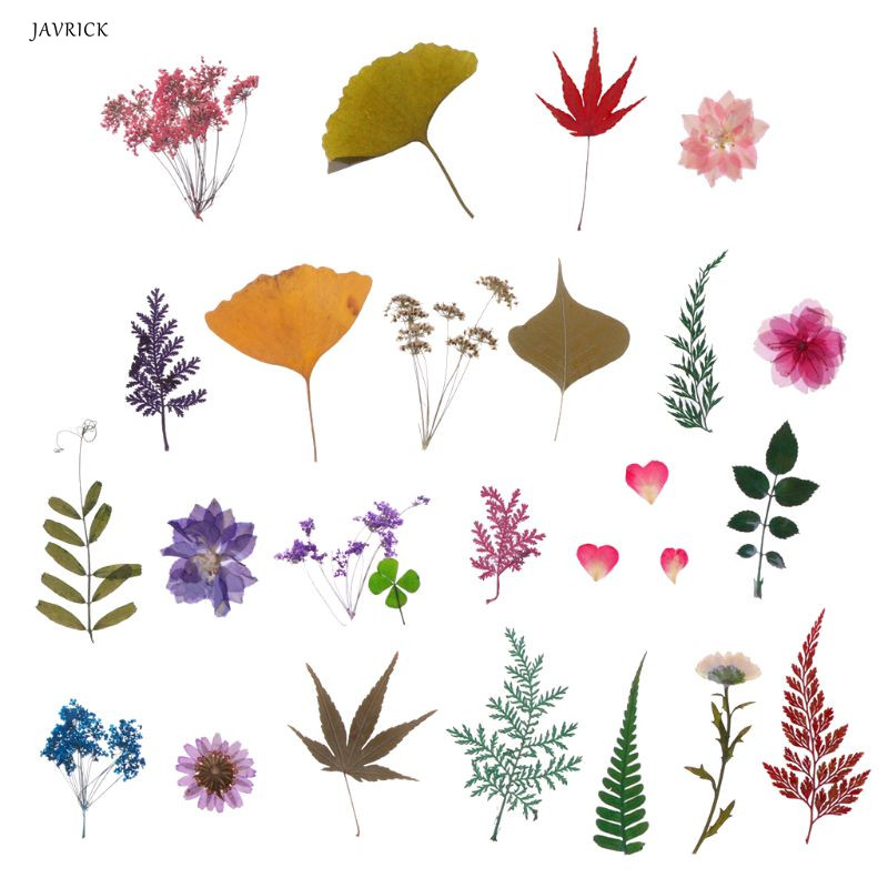 Natural Flowers Leaves Goldfish Epoxy Resin Fillers Jewelry Fillings Materials