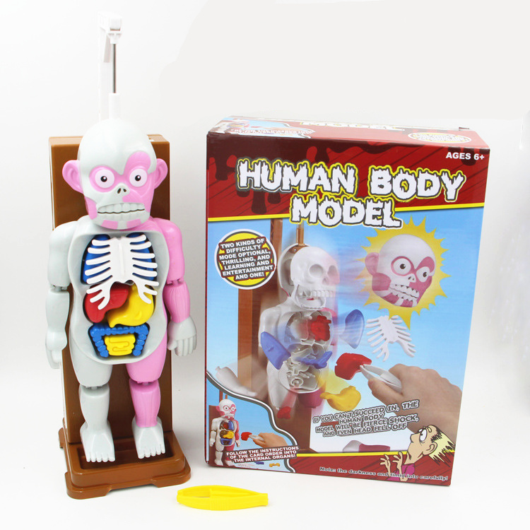 Novelty Gag Toys Human Anatomy Trick Joke Gift For Children
