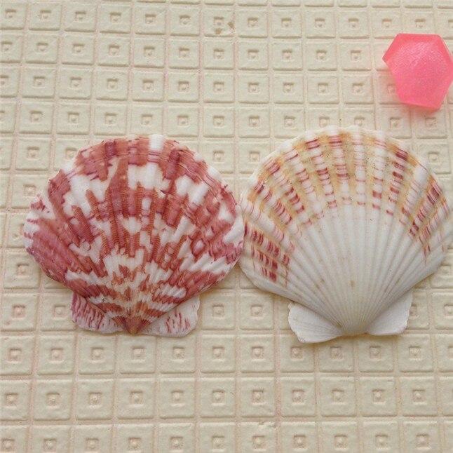 seashell6