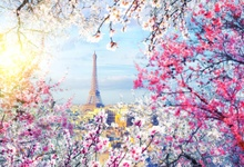 Laeacco Photography Backdrop Spring Blossom Cherry Flowers Eiffel Tower Town Baby Scenic Photo Background Photocall Studio