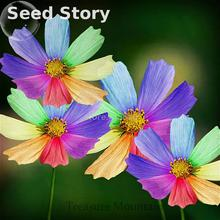 100 Pcs/bag Mix Rainbow Daisy Seeds Rare Bonsai Chrysanthemum Seed Flower Seeds For Home Garden Decoration Diy Plant Sementes