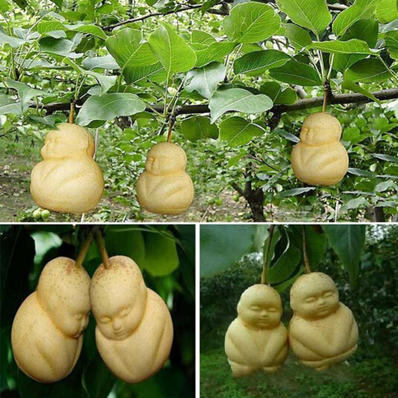 Rare Baby Ginseng Fruit pear seeds funny Ornamental Bonsai plants garden - 5 pcs / lot