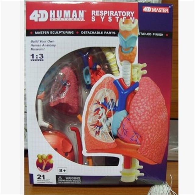 Mini 13 Human Lung Assembly Model Assembled Human Anatomy Model