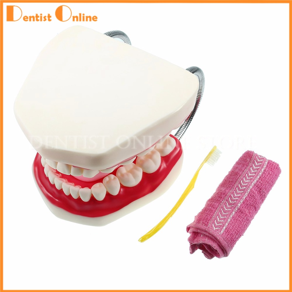 Dental Adult Teeth Model 6 Times Full Mouth Tongue Model With Brush For Kindergarten Child Teaching Study Tooth Brushing heymodel adult teeth model dental teaching model with dp jaw rack