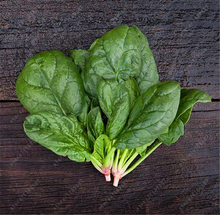 100pcs/bag spinach seeds round leaf nutrition and health food seeds vegetables plant for home garden easy to grow