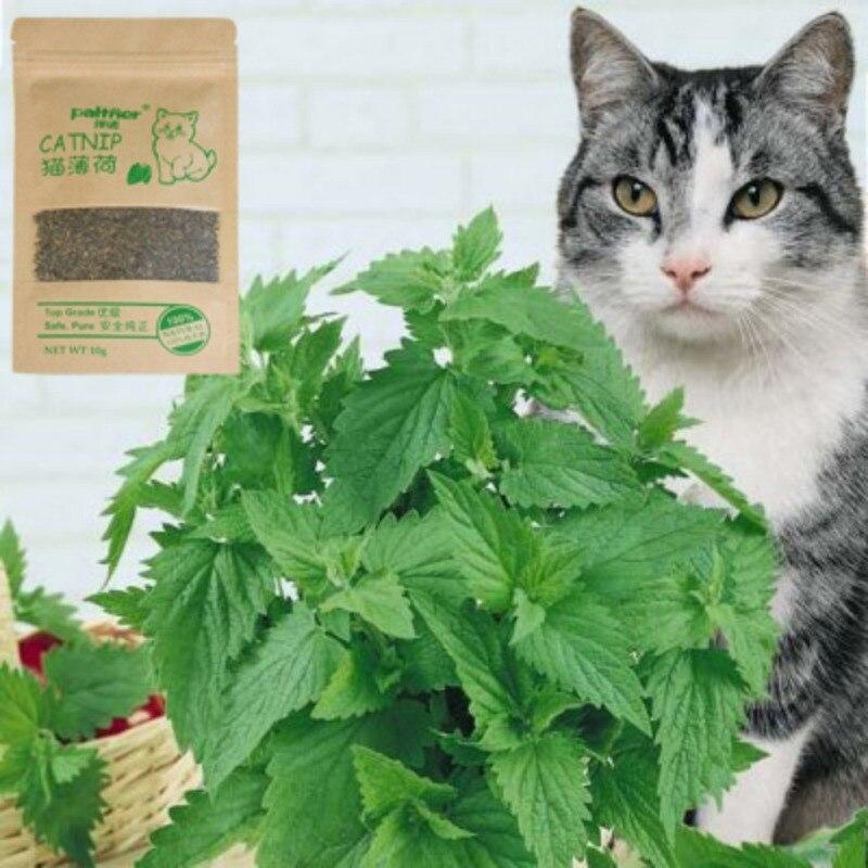 2019 Kat Speciale Nieuwe Organische 100% Natuurlijke Premium Kattenkruid Vee Gras 10g Menthol Smaak Grappige Dierbenodigdheden Interactieve Kat Speelgoed