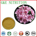 Top Quality Pelargonium Sidoides Root Extract ,Geranium extract powder 20:1  100g