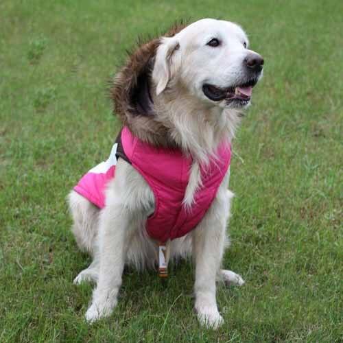 Pet S World Large Big Dog Winter Clothes Golden Retriever Ski Coat